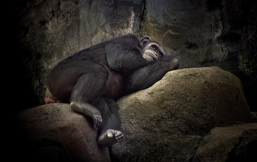 Slumber by Maria Reverberi