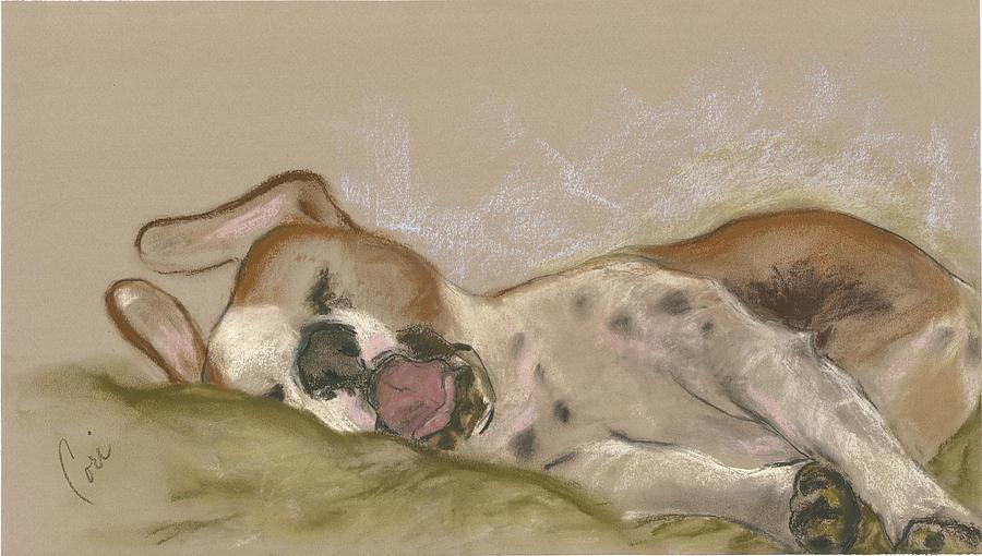 Dog Drawing - Slumbering Grace by Cori Solomon