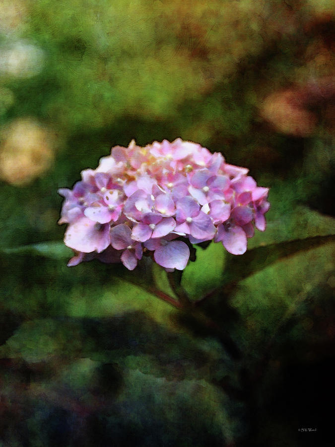Impressionist Photograph - Small Blossoms 2388 Idp_2 by Steven Ward
