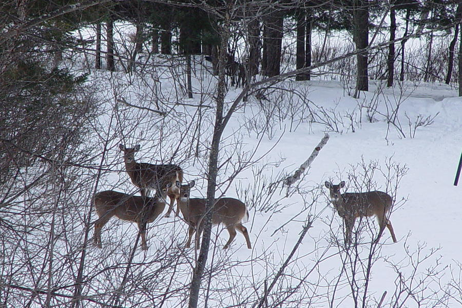 Small Group Of Deer Photograph By Dorothea Abbott