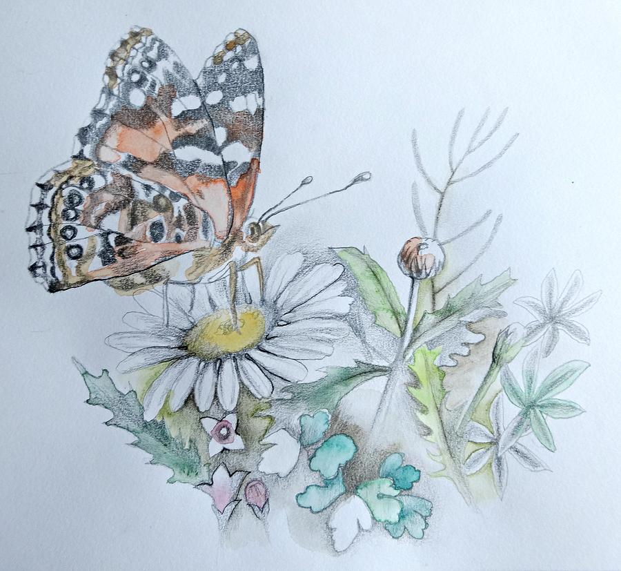Butterfly Drawing - Small Pleasures by Rose Legge