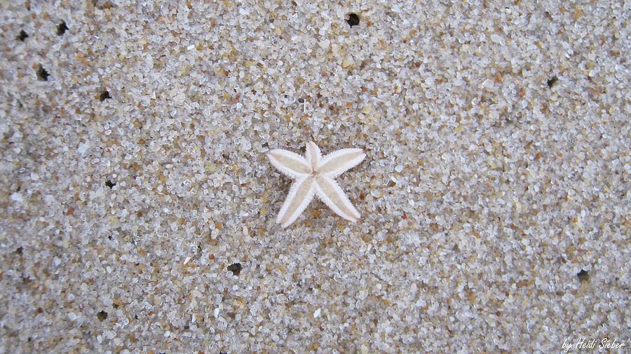 Sylt Photograph - Small star fish by Heidi Sieber