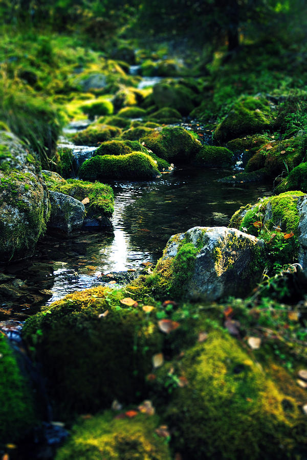 Amazing Photograph - Small Stream In Green Forest Lapland by Sandra Rugina