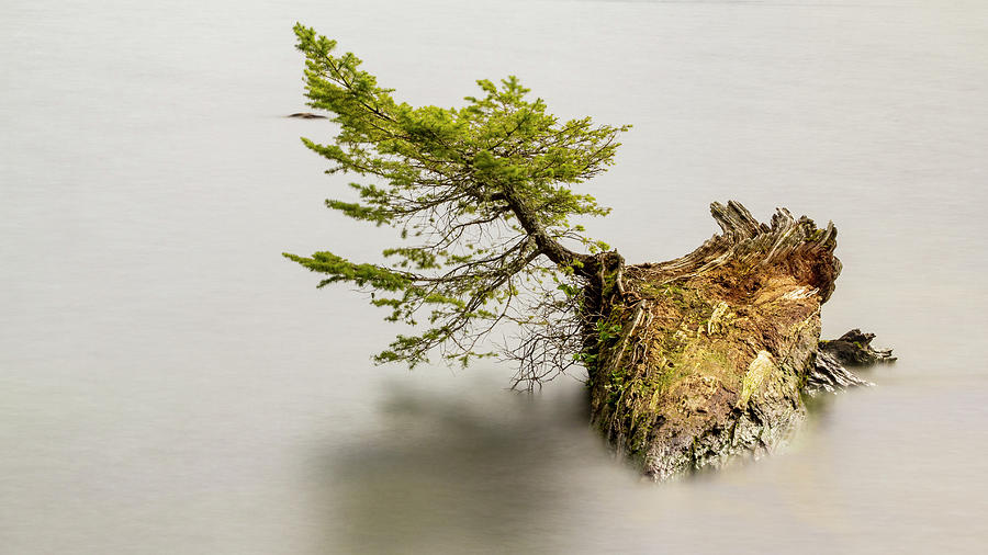 Small Tree On A Stump by Tony Locke