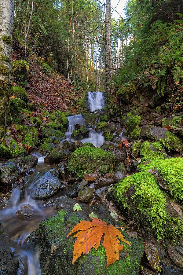 Waterfall Photograph - Small Waterfall At Lower Lewis River Falls by David Gn