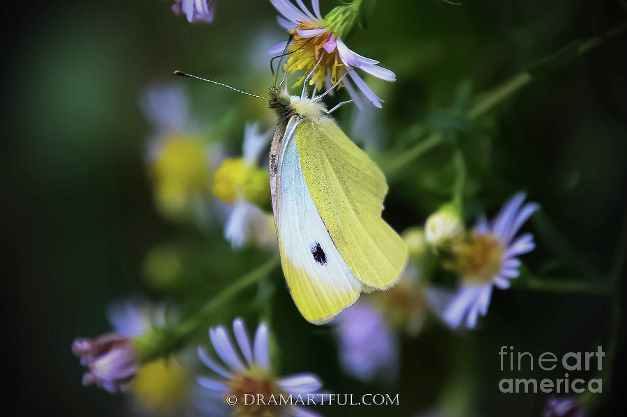 Outdoors Photograph - Small, White, Beautiful by Maria Costello