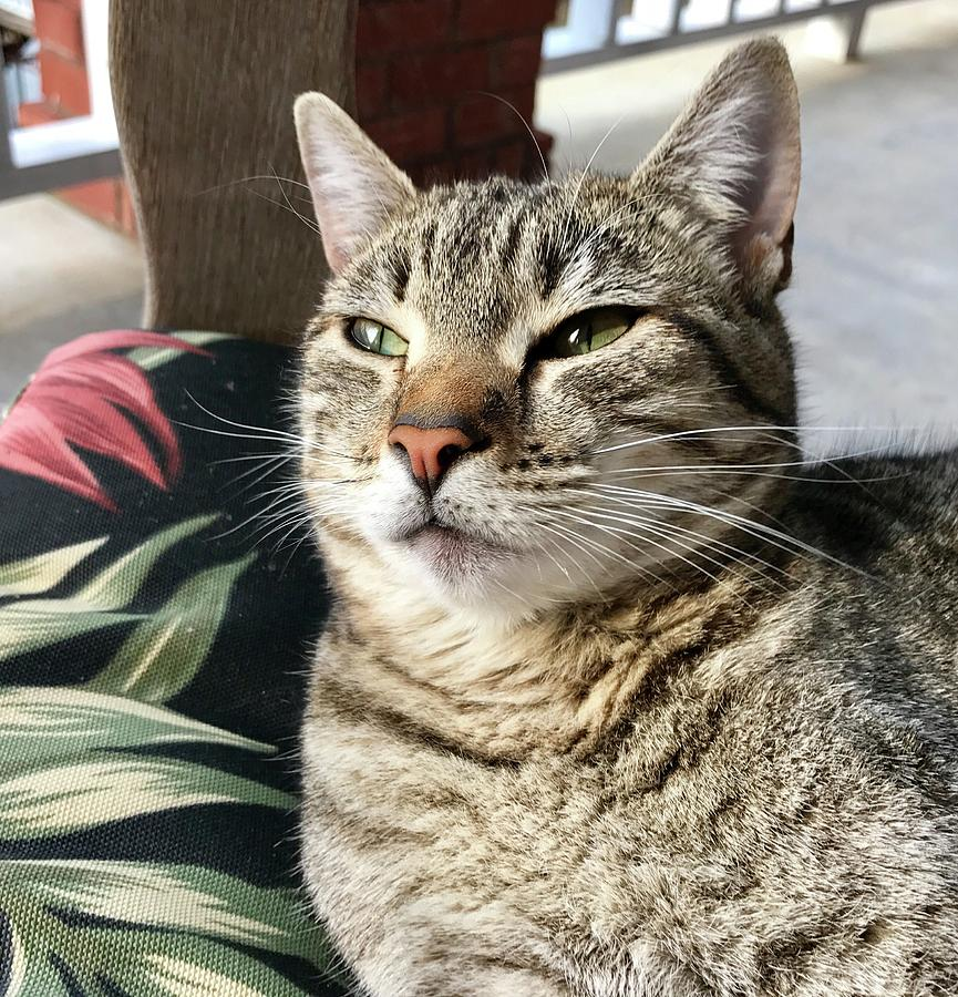 Cat Photograph - Smartycat by Frank TuttPutt Tuttle