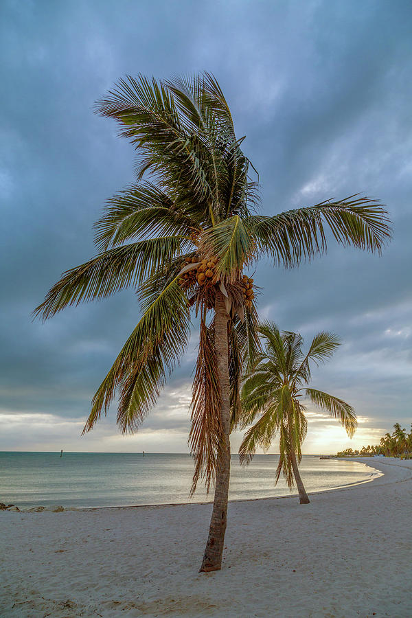 Key Photograph - Smathers Beach Coconut Sunset by Betsy Knapp