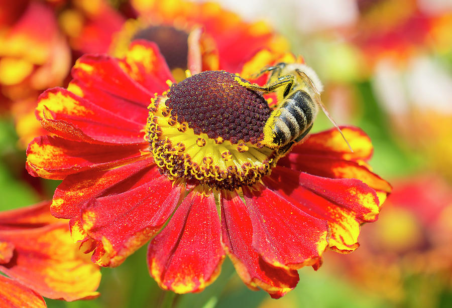 Smeared Photograph - Smeared in a pollen by Konstantin Bibikov