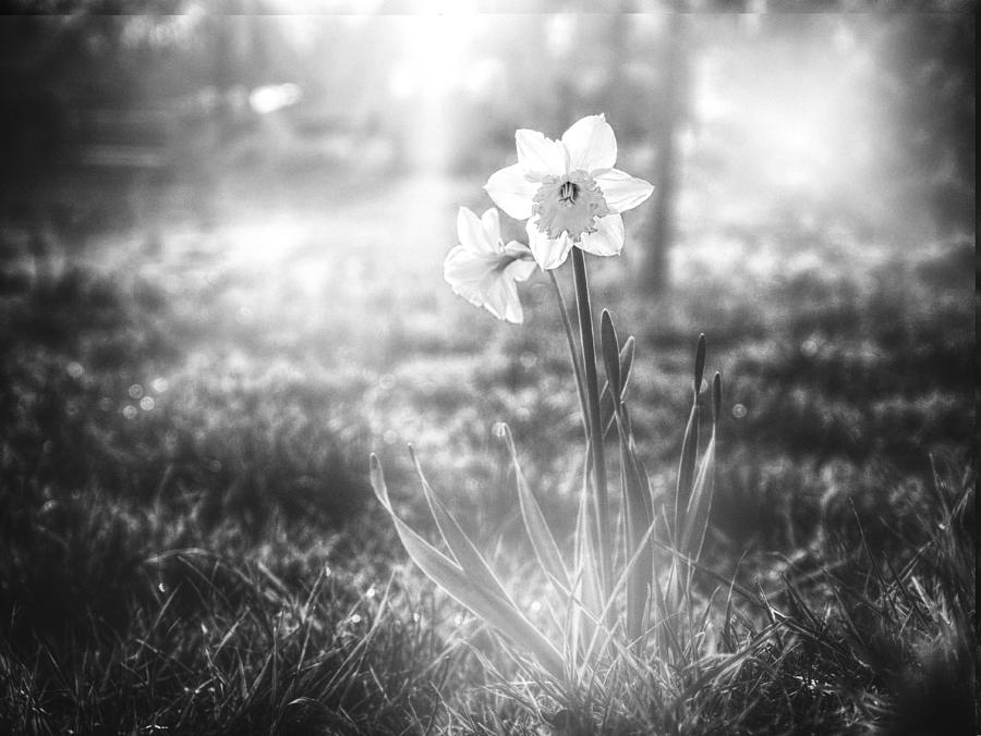 Daffodil Photograph - Smell Of The March by Jaroslav Buna