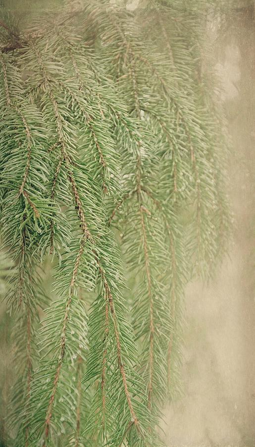 Pine Needles Photograph - Smell The Pine by Angie Tirado
