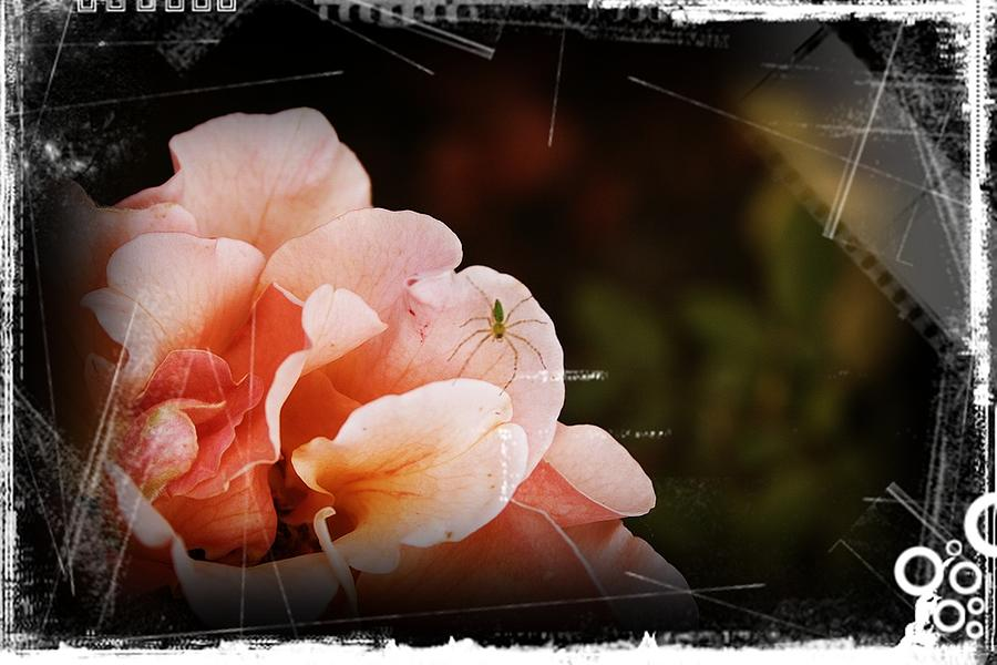 Rose Photograph - Smelling The Roses by Theresa Higby