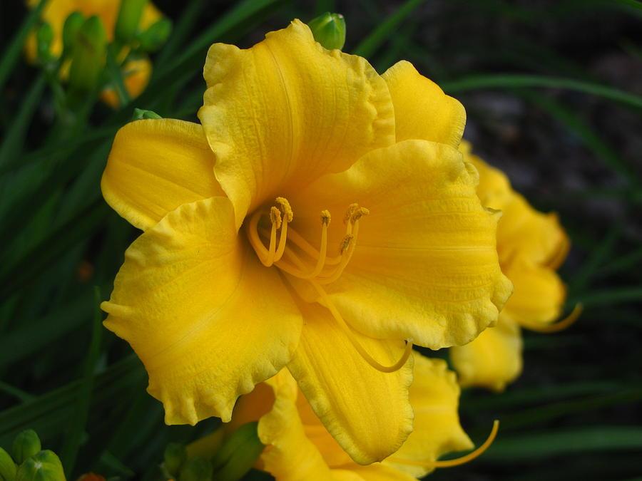 Yellow Photograph - Smile by Emilia Tokes