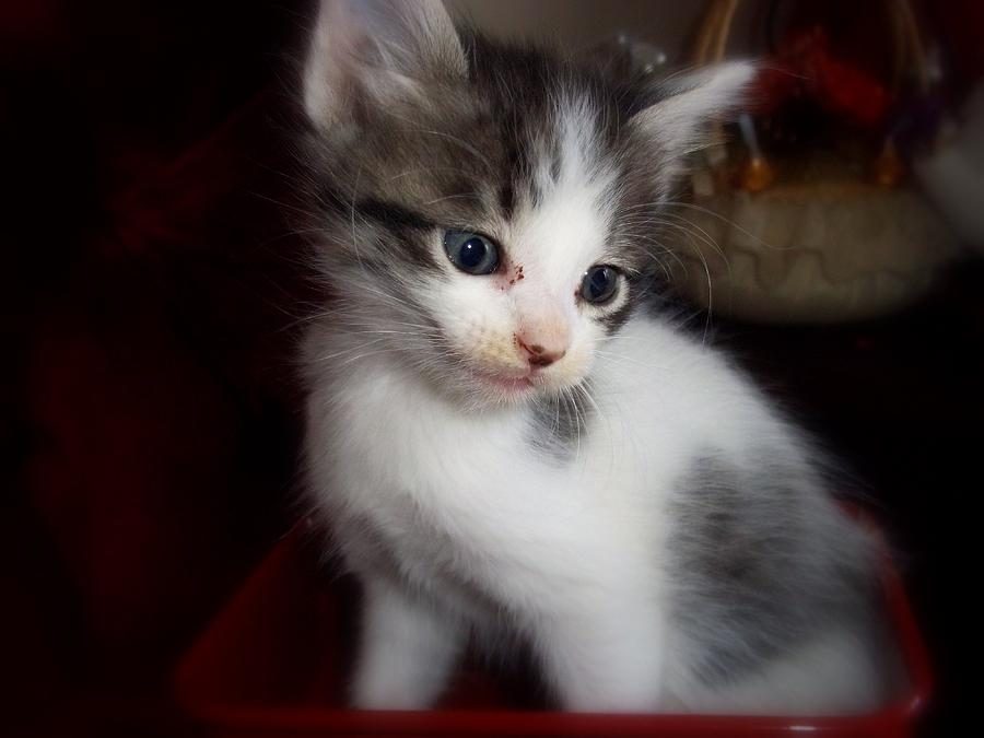 Kitten Photograph - Smile For You by Janell Calori