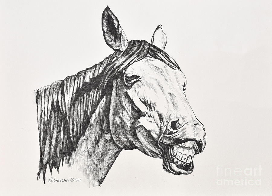 Horse Drawing - Smile by Suzanne Leonard