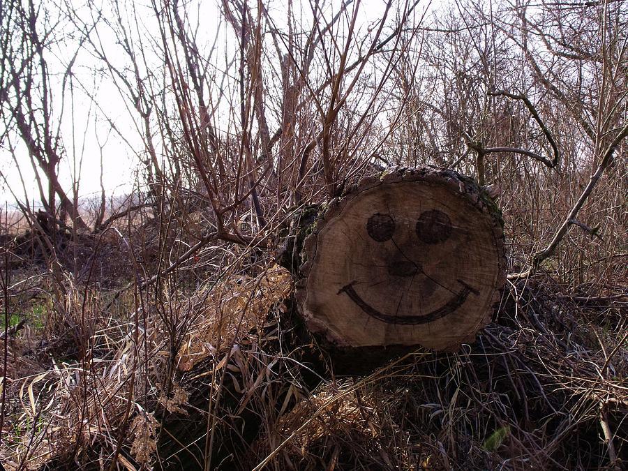 Woods Photograph - Smiley Log by Anna Villarreal Garbis