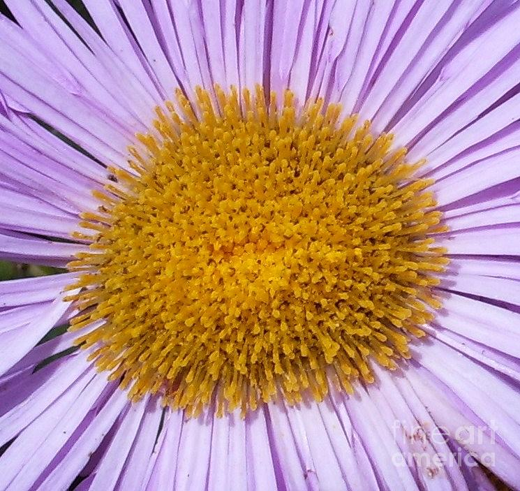 Flower Photograph - Smiling Brightly by Deborah Brewer