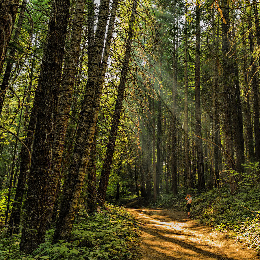 Trail Photograph - Smokey Forest by Mike Herdering