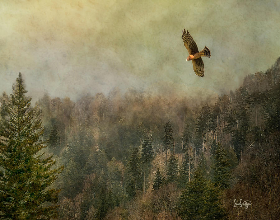 Smokey Mountain Memory by Sandra Schiffner