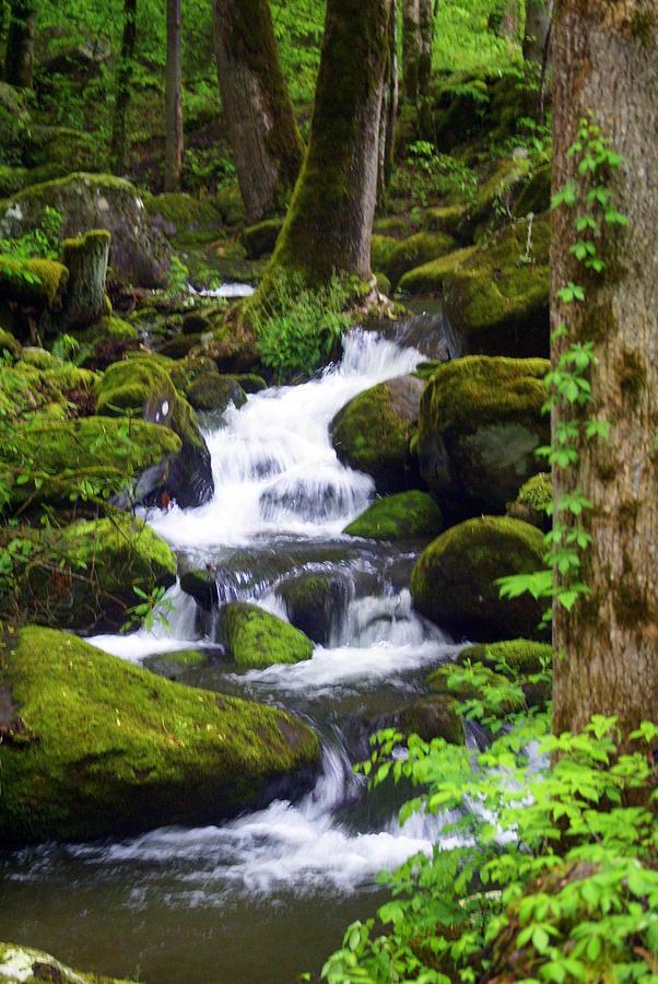 Waterfall Photograph - Smokey Mountain Stream by Marty Koch