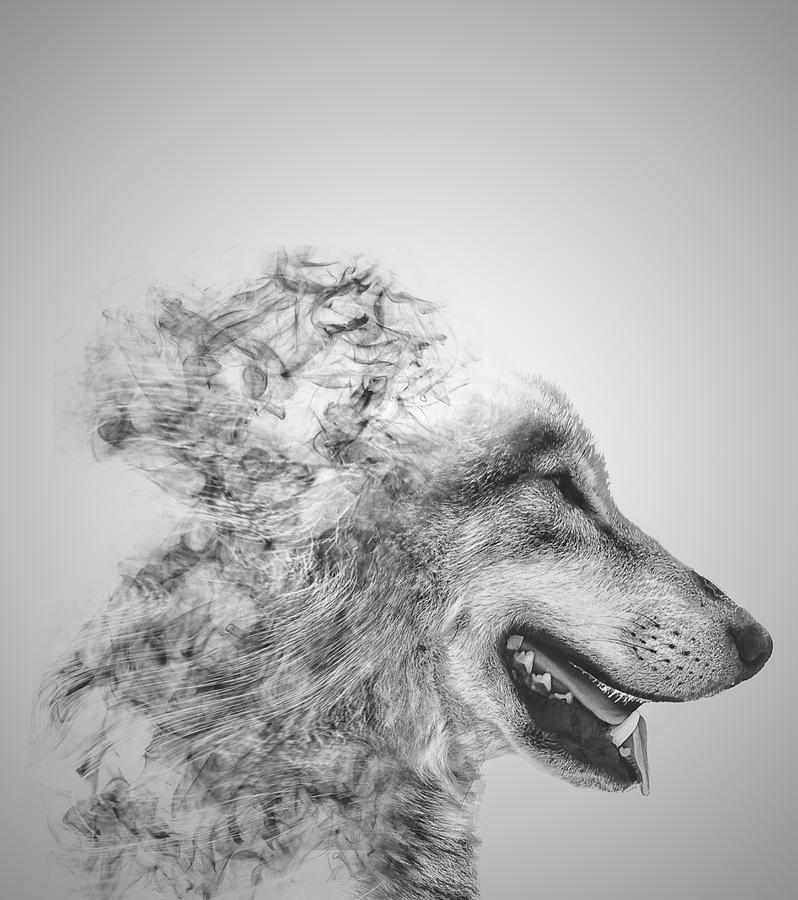 Smokey Wolf Photograph