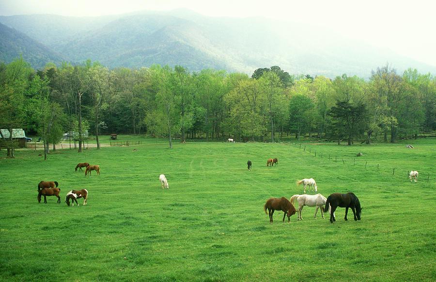 National Park Photograph - Smokies Horses by John Burk