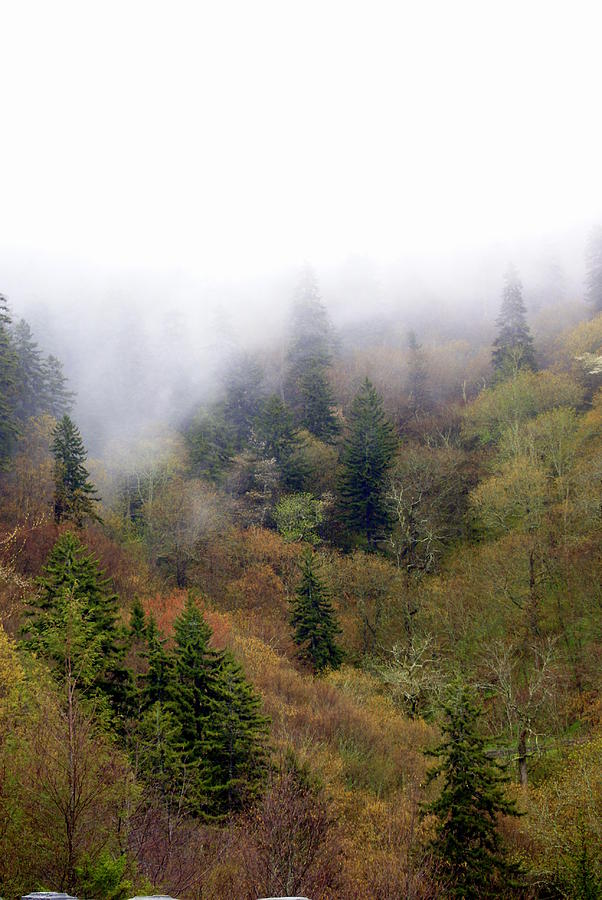 Fog Photograph - Smoky Mount Vertical by Marty Koch