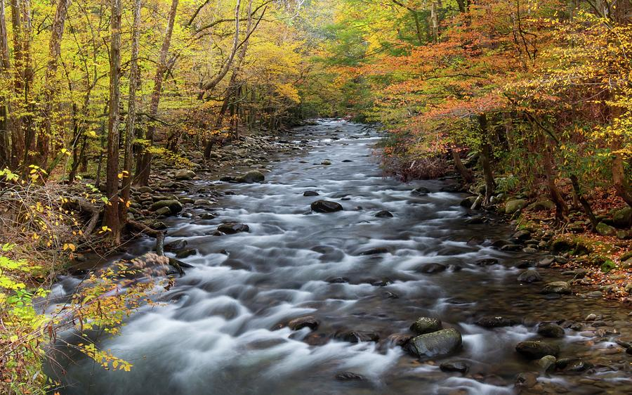 Smoky Mountain Stream in Autumn by Chris Berrier