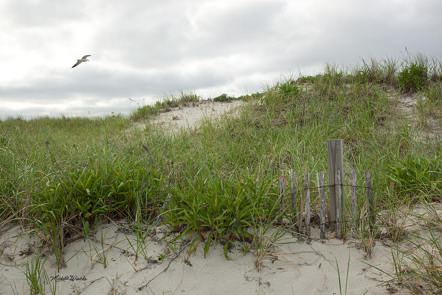 Dune Photograph - Smugglers Beach Dune South Yarmouth Cape Cod Massachusetts by Michelle Wiarda