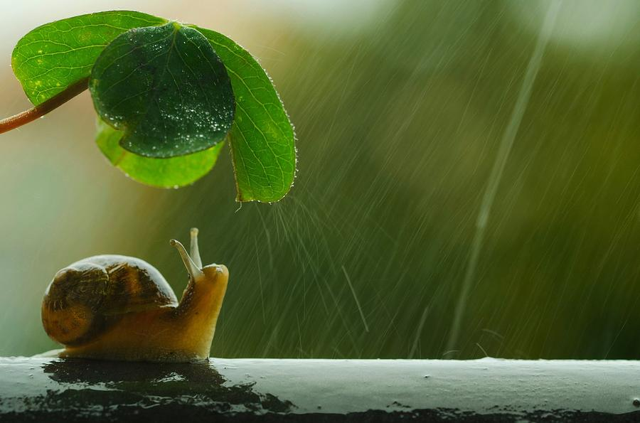 Snail Digital Art - Snail by Dorothy Binder