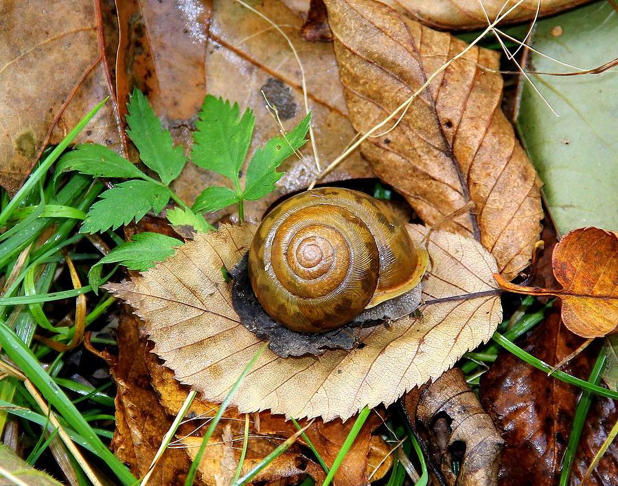 Snail Photograph - Snail Home by Allen Nice-Webb