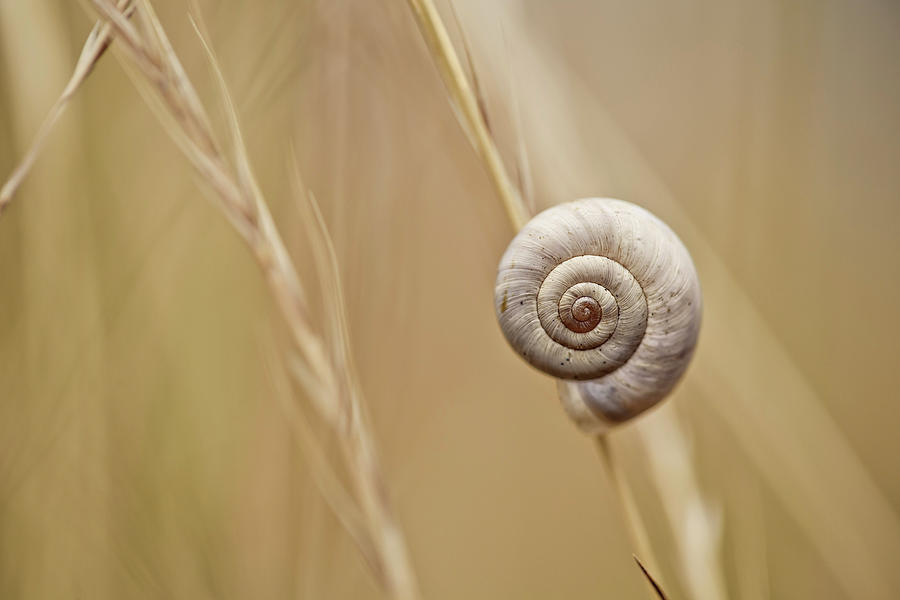 Snail On Autum Grass Blade Photograph