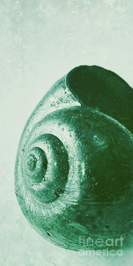 Snail Photograph - Snail Shell by Angela Doelling AD DESIGN Photo and PhotoArt