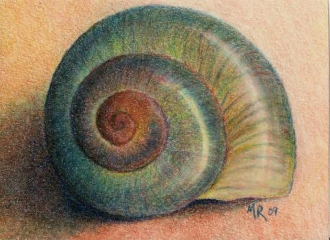 Snail Drawing - Snail Shell by Mary Rogers