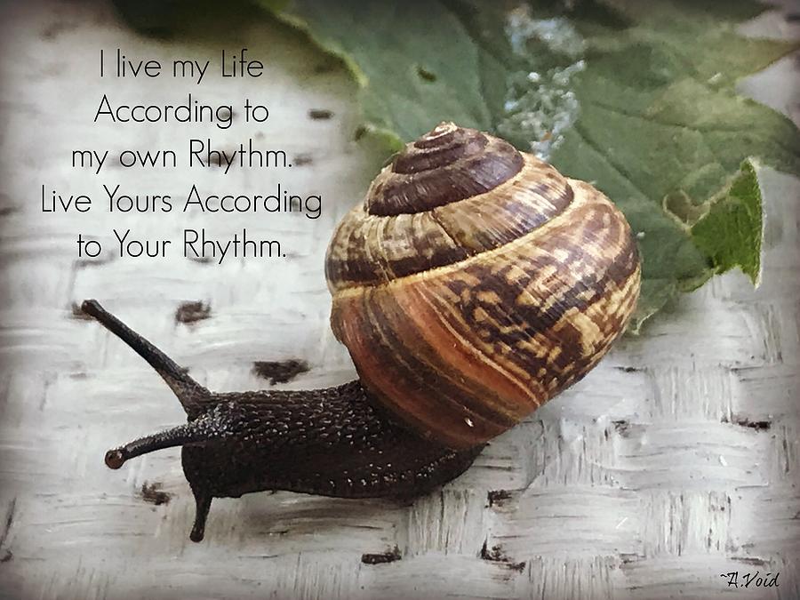 Snail's Rhythm by Catherine Asoka Void