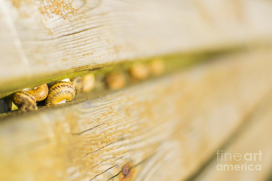 Animal Photograph - Snails by Stefano Piccini