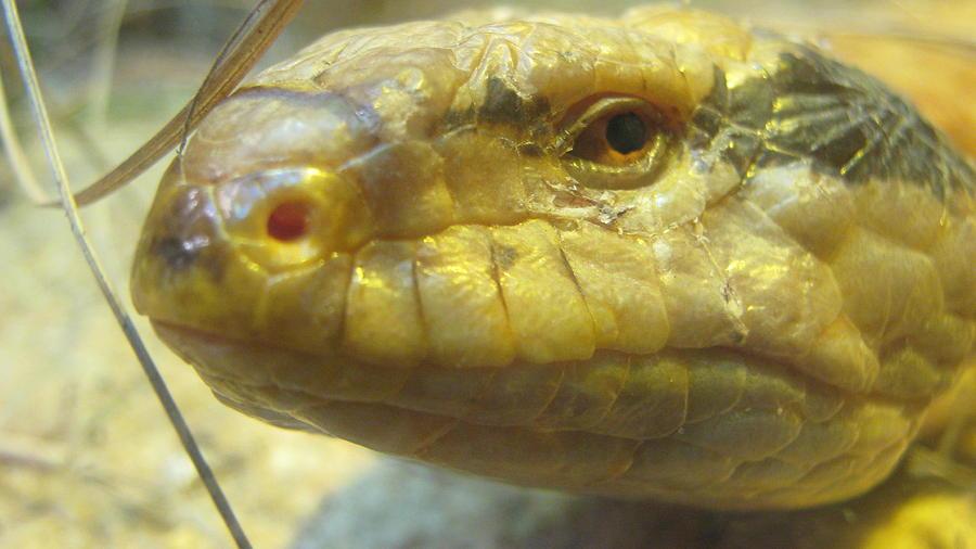Snake Eye Photograph by Emma Frost