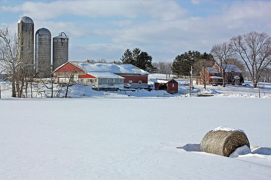 Red Barn Photograph - Sno Cow Here by ML Lombard