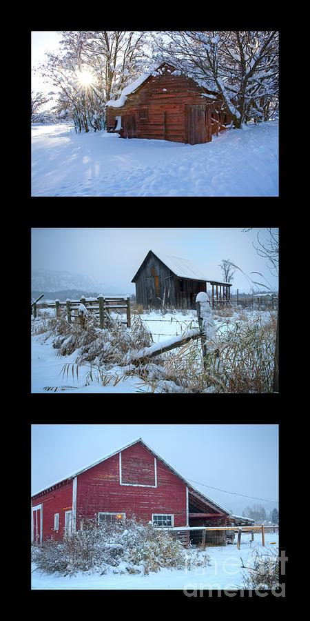 Snow Photograph - Snow And Barn Trio by Idaho Scenic Images Linda Lantzy