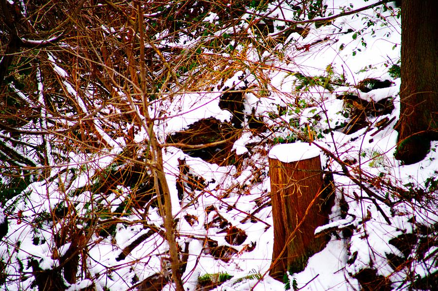 Winter Photograph - Snow And Tree Trunk by Paul Kloschinsky