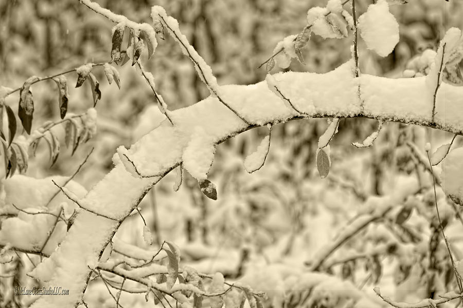 Snow Photograph - Snow Arch by LeeAnn McLaneGoetz McLaneGoetzStudioLLCcom