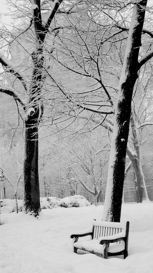 Philadelphia Photograph - Snow Bench by Andrew Dinh