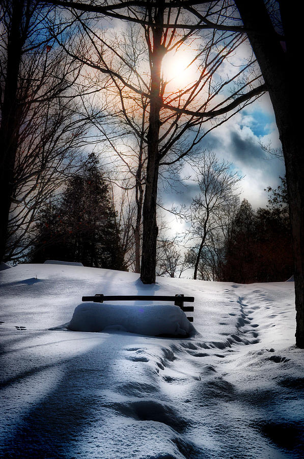 Bench Photograph - Snow Benched by Emily Stauring