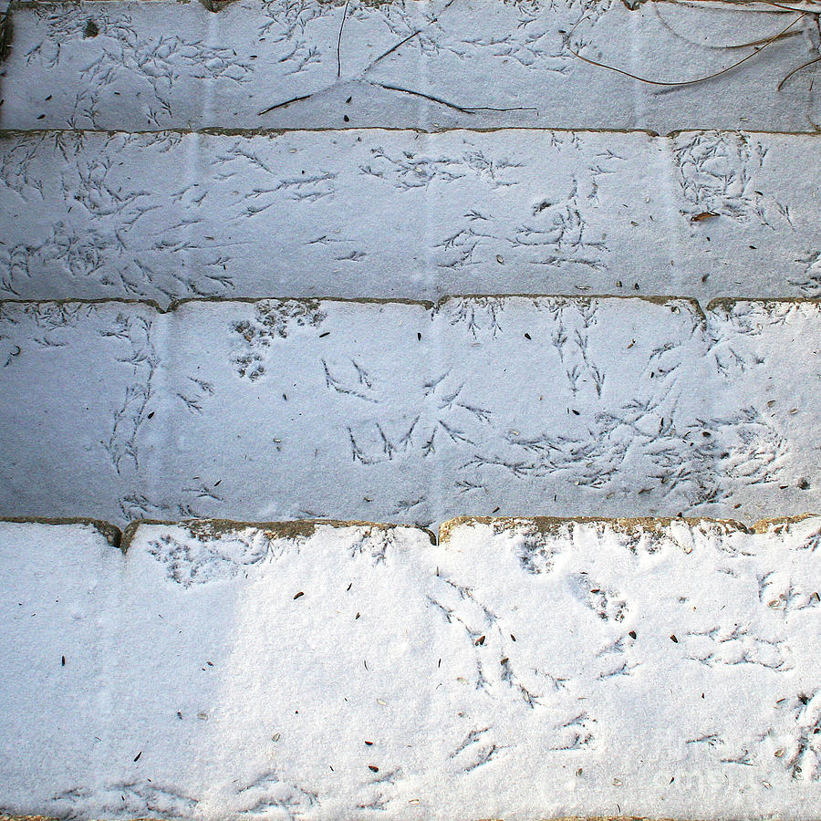 Snow Photograph - Snow Bird Tracks by Karen Adams