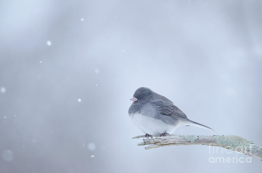 Snow Bird by Wanda Krack