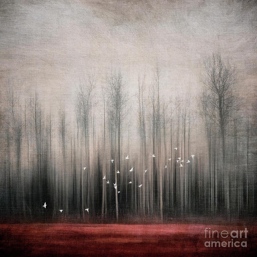 Snow Bunting Photograph - Snow Birds by Priska Wettstein