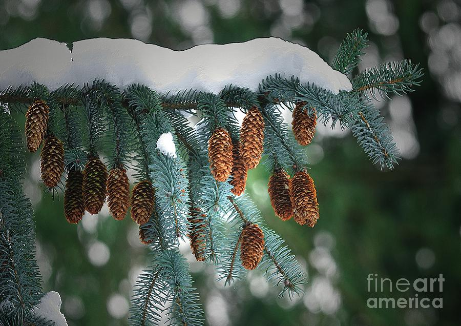 Cones Photograph - Snow Cones by Sharon Talson