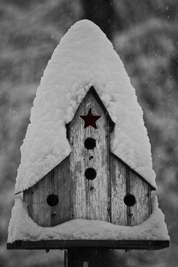 Snow Photograph - Snow Covered Birdhouse by Teresa Mucha