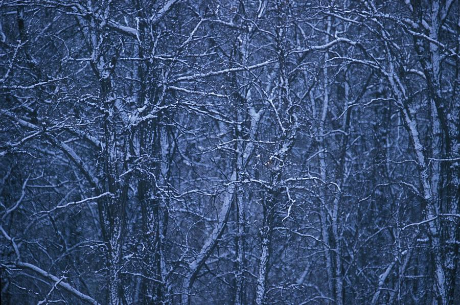 Trees Photograph - Snow Covered Trees by Jack Gantzel