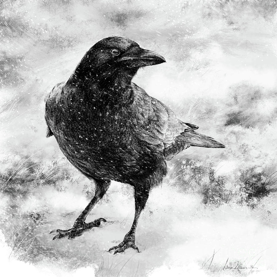 American Crow Drawing - To Know A Crow by Laurie Musser